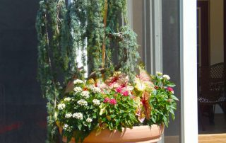 Summer Beds & Pots 52